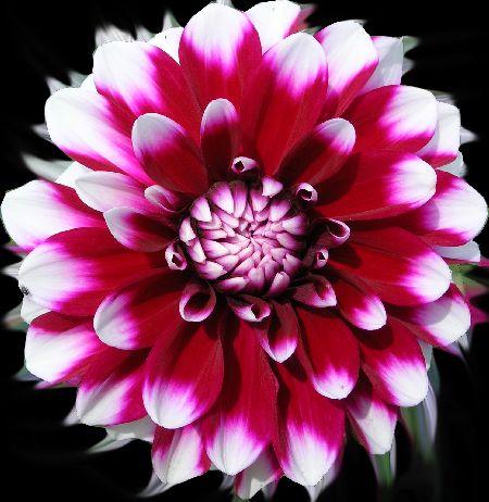 Blumen  Lebensart im Markgrflerland