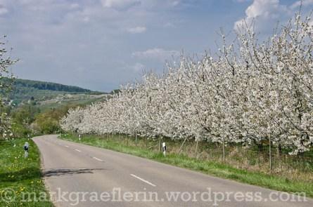 ...die Straße nach Feldberg