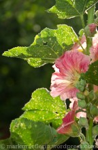 Garten Juni 33