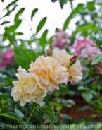 Garten Juni 38