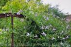Garten Marguerite17