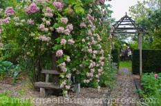 Garten Marguerite25