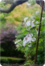 Garten Marguerite63