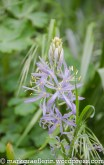 Garten Mai 1