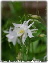 Garten Mai 5
