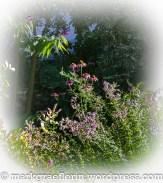 Garten Juli 22_1