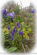 Garten März 12