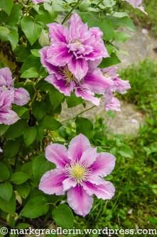 Garten Mai_Juni 15