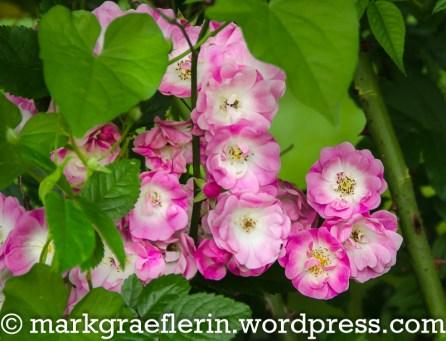 Englischer Garten Hugstetten 32