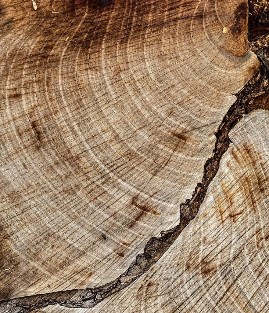 crack in wood rings