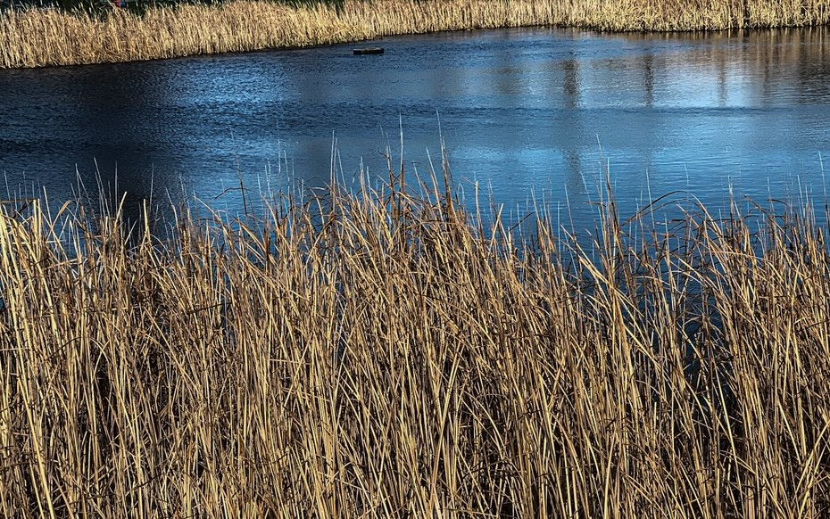 lake and weeds