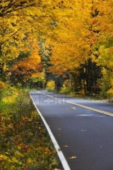 forest-road-in-fall