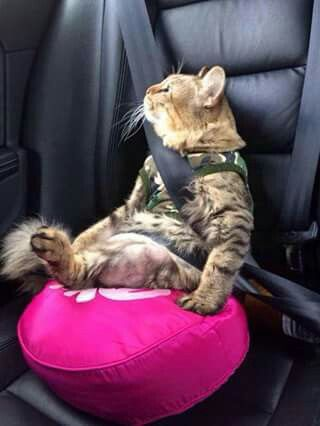 Who says Cats dont like car rides  Markosuns Blog