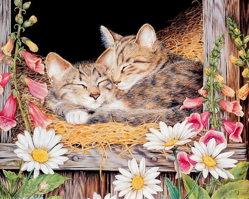 Cute Sleeping Kitten Wallpaper Illustrations By Jane Maday Art Blog Markovart