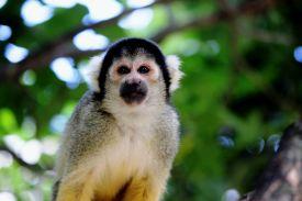Omuta Zoo 1