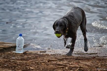 Wet Dog 1