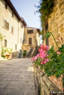Volpaia, Radda in Chianti, Tuscany, Italy