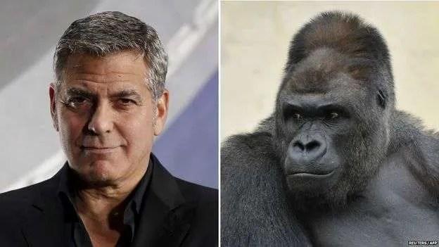Shabani-Clooney