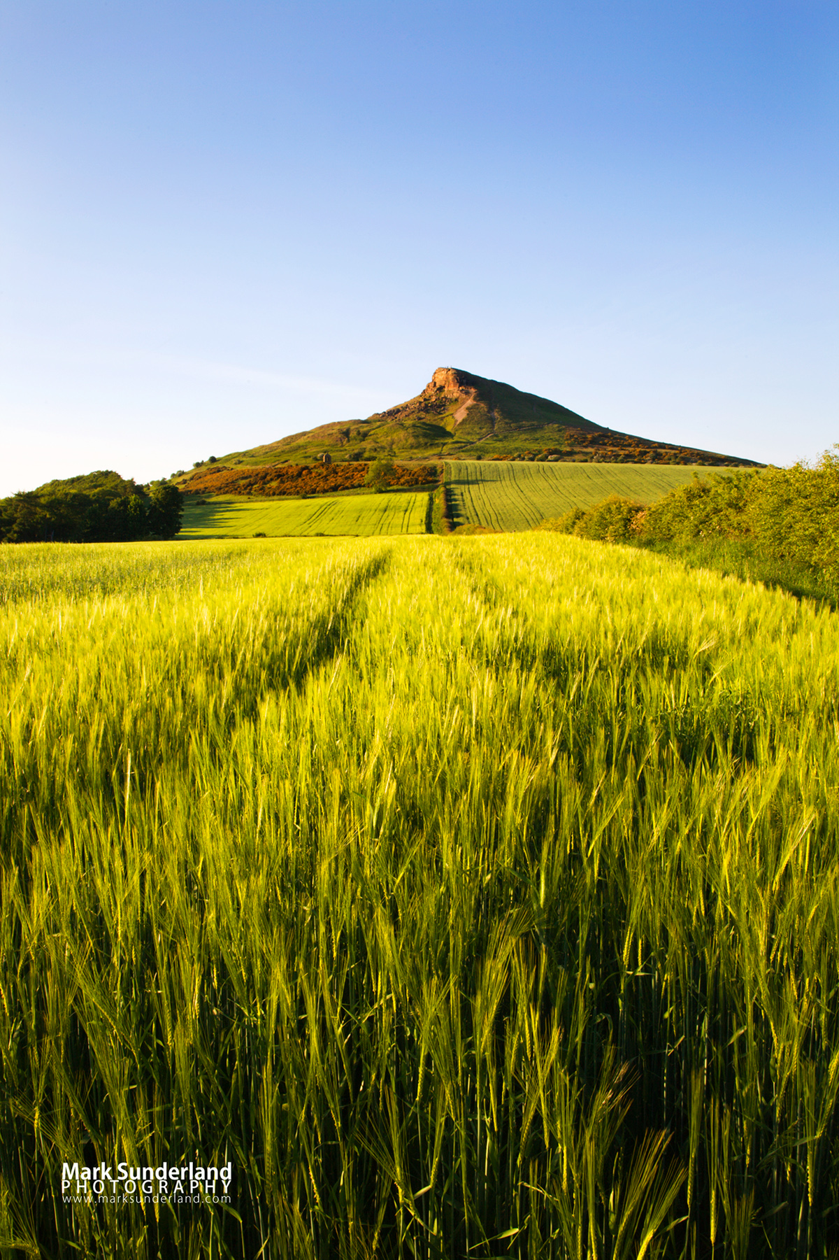 Roseberry Topping on a Summer Evening, North York Moors