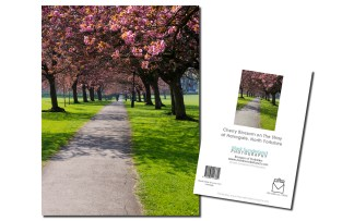 Harrogate Stray Cherry Blossom