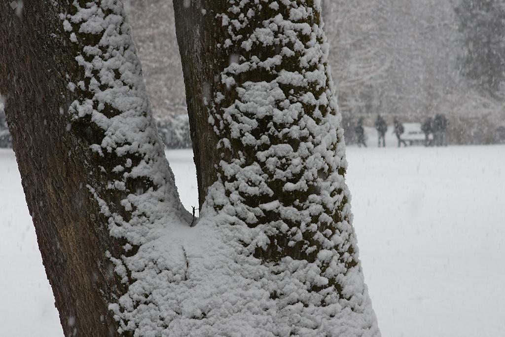/home/springm/Bilder/2010/2010-03/Karlspark/dsc26807b.jpg