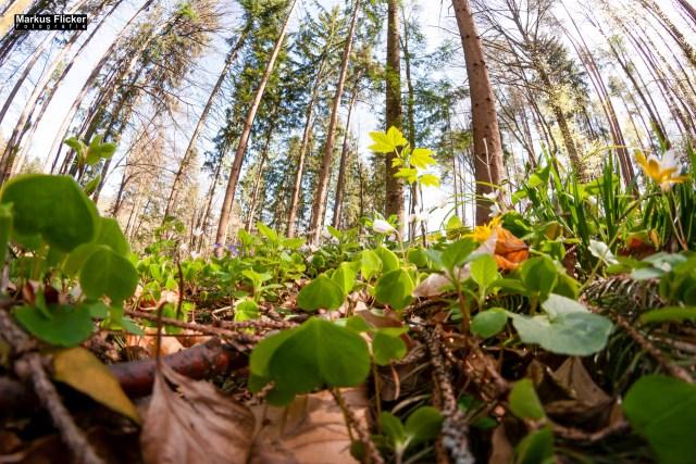 Fotoprojekt Weitwinkel Fotografie 365 Tage Walimex 8mm