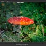 Portfolio Bildbearbeitung Postproduction DigiArt Retusche Photoshop Compositing Markus Flicker