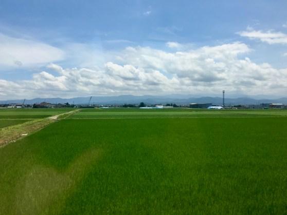 Fukui Fields