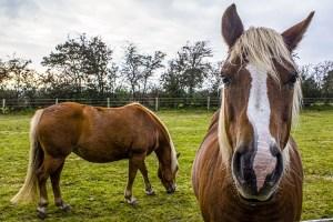 "Pferd ""Was guckst du?"""
