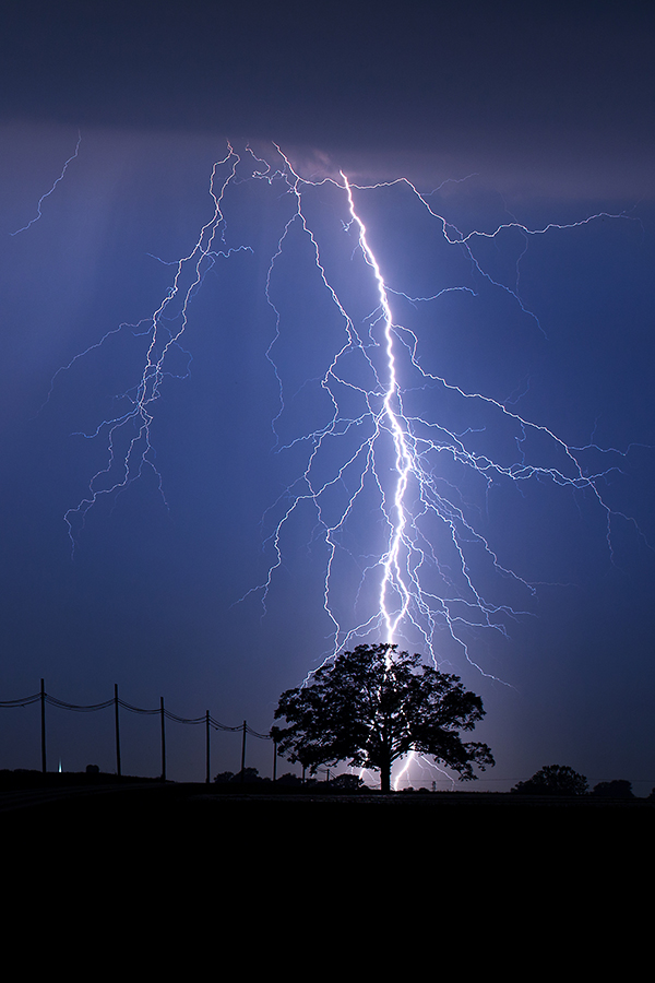 Image result for lightning striking a tree
