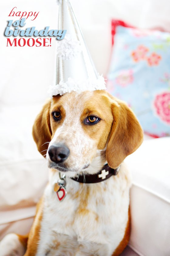 Puppy's 1st Birthday | MarlaMeridith.com