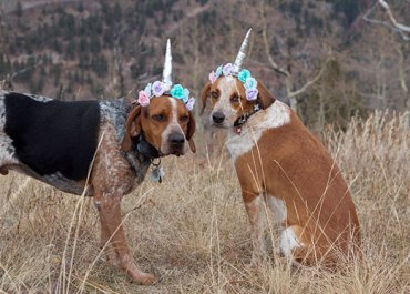 The Coonicorns of #Telluride | Happy Halloween from my coonhounds Moose & Bo! marlameridith.com