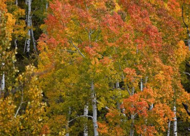 Leaf Peepers! 10 Best Places for Fall Foliage Road Trips