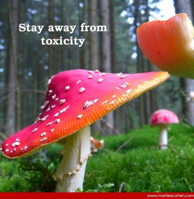 Stay Away from Toxicity