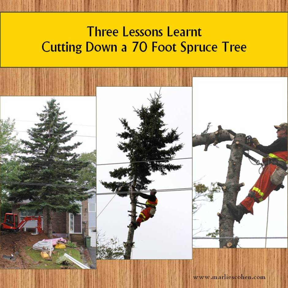 3 lessons learnt cutting a tree