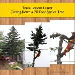 3 Lessons Learnt Cutting Down a 70 Foot Spruce
