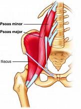 De Iliopsoas als veroorzaker van lage rugpijn.