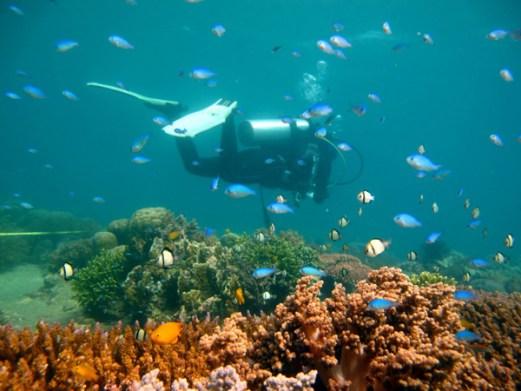 terumbu-karang-lombok-gili-3