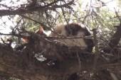 (ÖZEL) 3 gün boyunca ağaçta mahsur kalan kedi itfaiye ekiplerince kurtarıldı