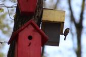 Bu parktaki kuşların yaşamları internet üzerinden gözlem altında