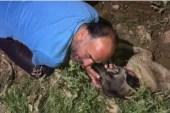 Araç çarpan köpeğinin başında göz yaşı döktü