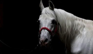 (Özel) Devletin en güzel 'baba'sı…Soyundan gelen 63 yarış atı servet kazandırdı