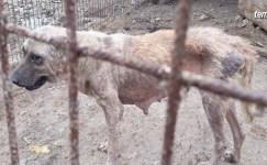 Geyve Alifuatpaşa Mahallesi sakinleri başıboş köpeklerden bıktı