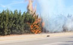 Kaynak kıvılcımı çam ağaçlarını yaktı