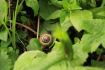 A snail in the grass