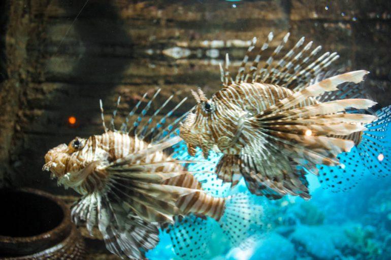 ryby oceanarium