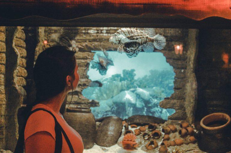 akwarium oceanarium