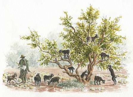 arganier-arbre-aux-chevres