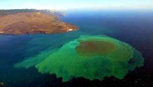 La vie jaillit d'un volcan sous-marin aux Canaries