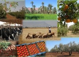Productions_du_Maroc